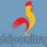 DD Poultry