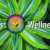 Dr. Dale's Wellness Center Icon